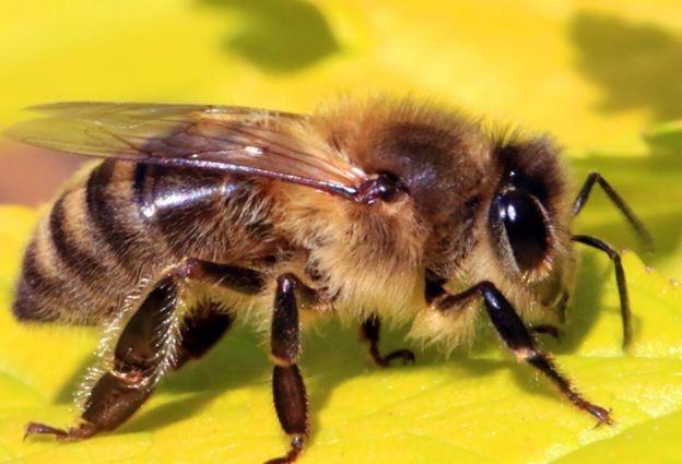 Как зимуют пчелы зимой