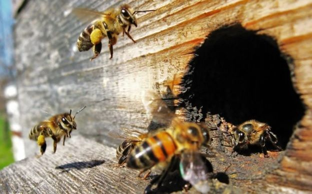Пчелы летают